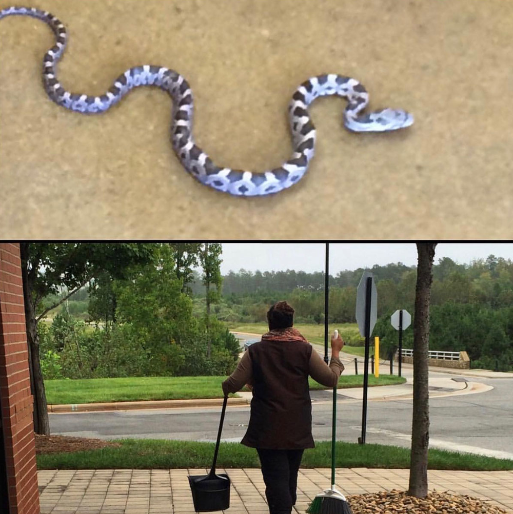 When a snake dropped from the ceiling into a client's lap at Blo in Raleigh, North Carolina, a stylist quickly swept it up and released it outside.