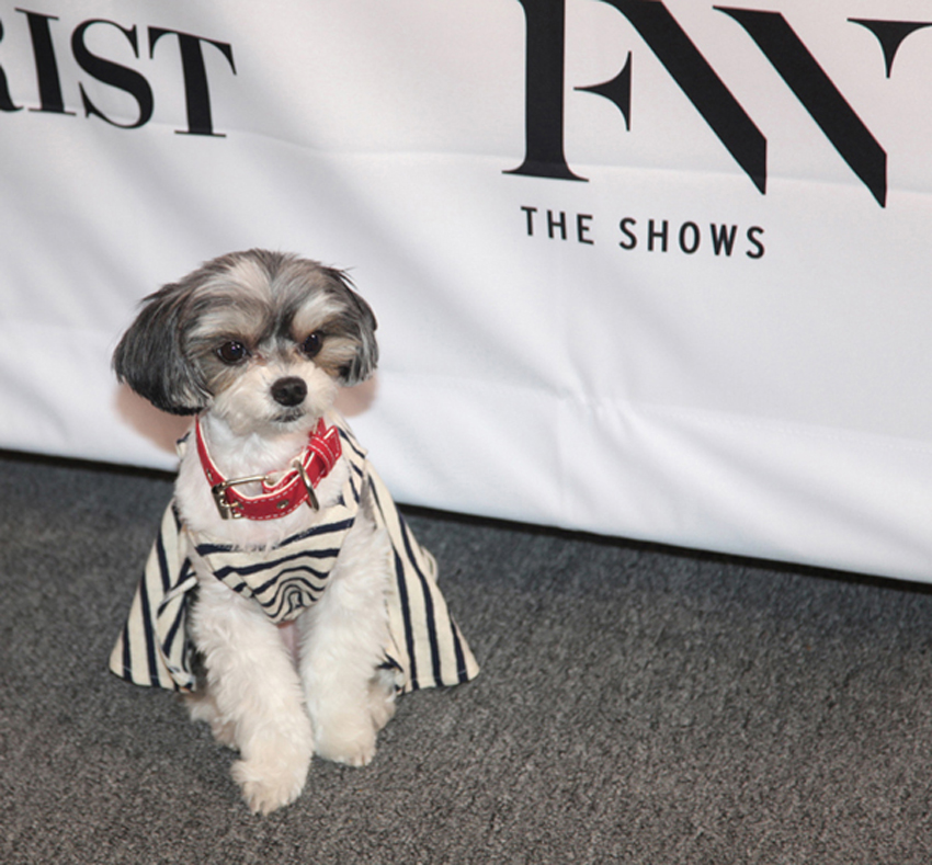 This is Tinkerbelle the dog, a real fashion pro, on the red carpet at the Francesca Liberatore Show. The dog has its own website, Facebook, Instagram pages and more.<br />Photo: Helen Oppenheim