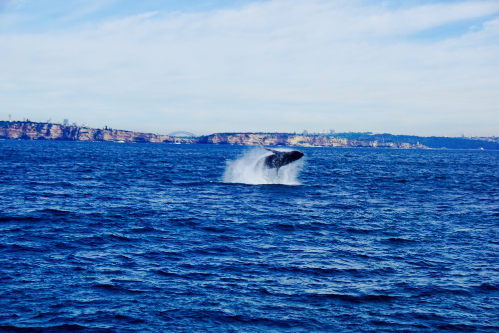 The KLC crew goes whale watching.