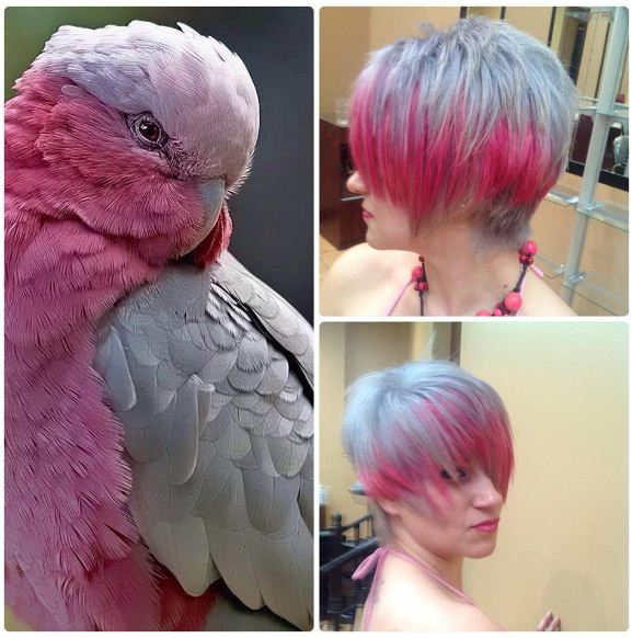 BEFORE AND AFTER INSPIRATION: Color, it's for the Birds!