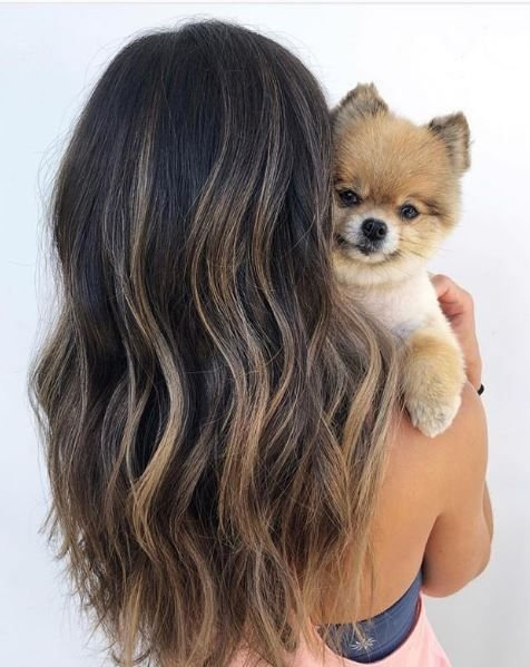 When your highlights are inspired by your pup's fur 😍 how cute would that be if it were true? Gorgeous color! Featuring @ruka.thedazedog