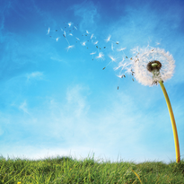 New Directions - Making Pivotal Changes in Your Life