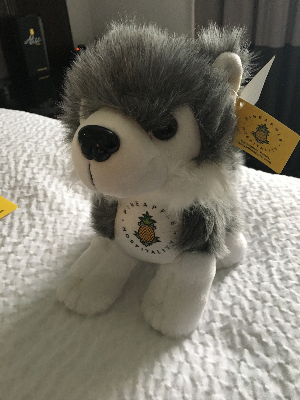 With a small donation to the Humane Society, the friendly huskey Dash is ready to go home with you.