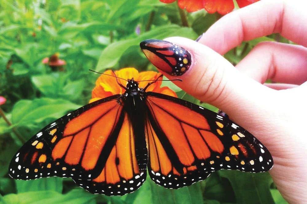 <p>Blanche Macdonald Global Makeup and Nail Studio graduate Paige Roy created these butterfly-inspired nails in a trendy almond shape.</p>