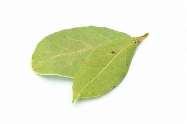 <p>Bay Laurel - rejuvenating</p>
