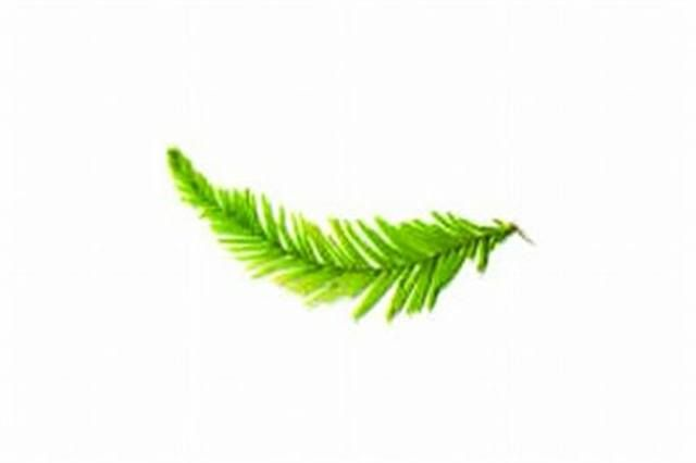 <p>Cypress - relaxing</p> <p>Increases circulation; relieves muscle cramps; reduces nervous tension and other stress-related problems </p>