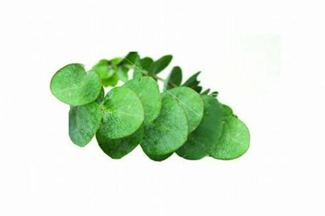 <p>Eucalyptus - rejuvenating</p> <p>Helps with odors; assists with arthritis; refreshing; used as an astringent, antiseptic </p>
