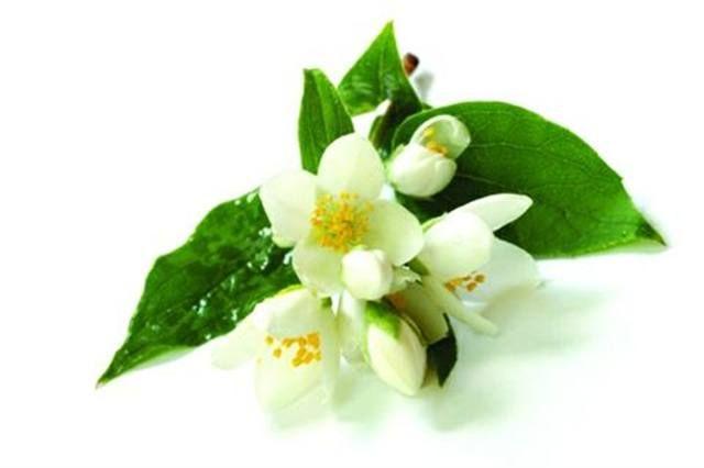 <p>Jasmine - aphrodisiac</p> <p>Lifts depression; calms nerves; promotes relaxation </p>