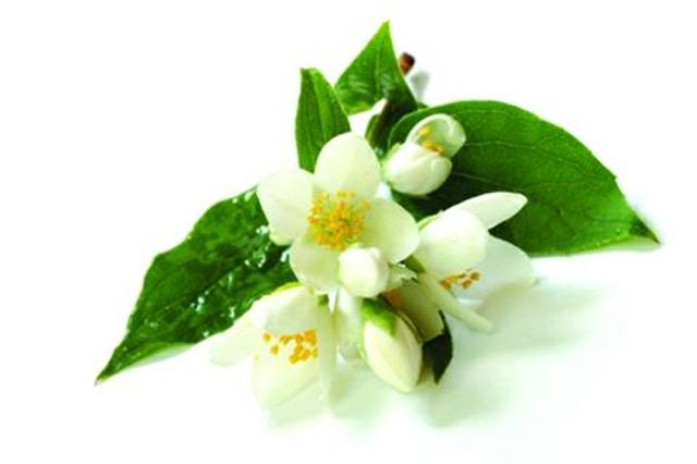 <p>Jasmine - aphrodisiac</p>