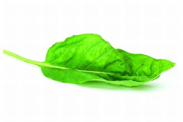 <p>Sweet Basil - rejuvenating</p>