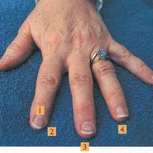 Custom Built Nails