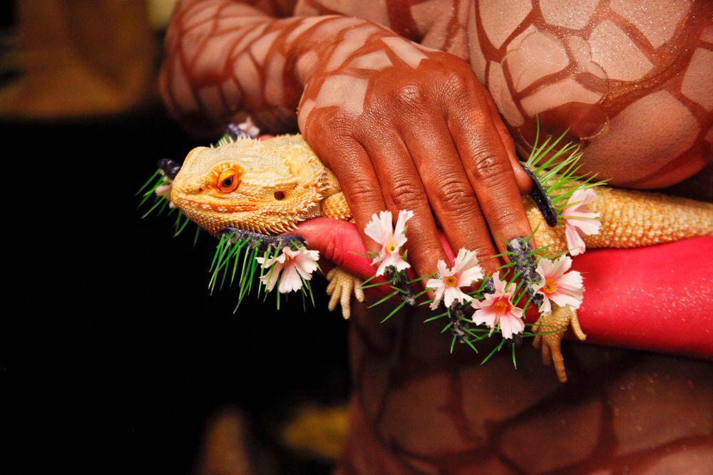 <p>Headliners Salon: Yavenue drilled through the nail to keep the spikes in place for the blooming cactus, angled as she'd envisioned. Osborne lent her own pet sunfire-bearded dragon to finish this look.</p>