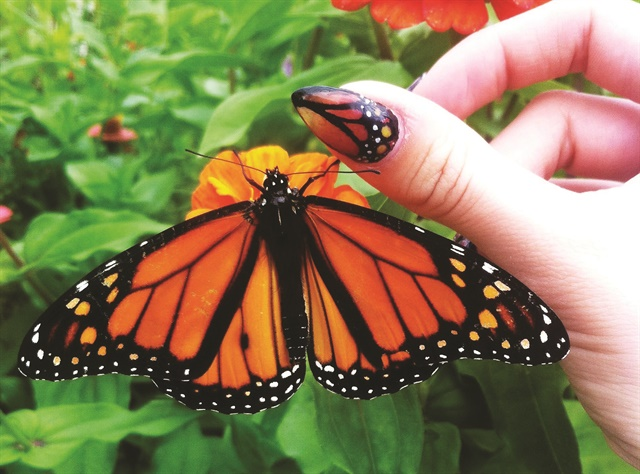 <p>BlancheMacdonaldGlobal Makeup and Nail Studio graduatePaige Roy created these butterfly-inspired nails in a trendy almond shape.</p>