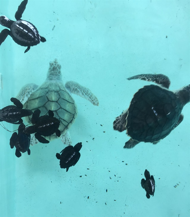 A turtle sanctuary was a stop chosen by a few cruisers, myself included.