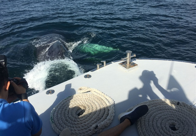 <p>A whale-watching snorkeling trip taken by several attendees included a close encounter in the form of a hello boat bump from a humpback whale!</p>