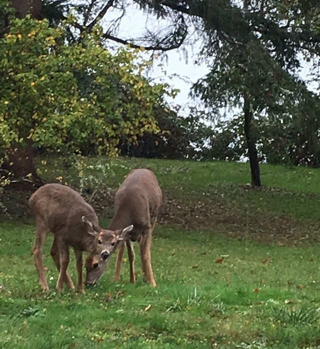 <p>Find deer grazing right outside your cabin.</p>