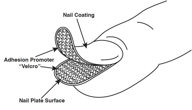 Some adhesion promoters work a little like Velcro — with one side sticking to the nail coating and the other side sticking to the nail plate.