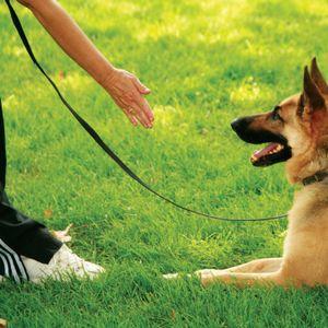 My Other Life: Cindy Plettl-Jackson, Service Dog Trainer