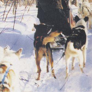 My Other Life: Carol Perdue, dog-sledder