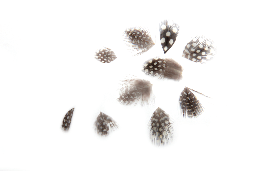 <p>Add flair to nails with <strong>So Gel&rsquo;s</strong> organic black nail feathers with white polka dots.&nbsp;</p>