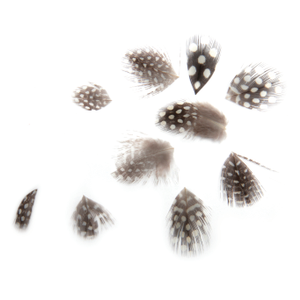 Organic Black Nail Feathers