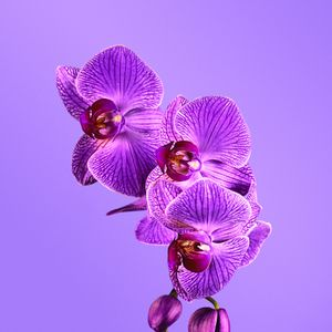 Trend Watch: Radiant Orchid
