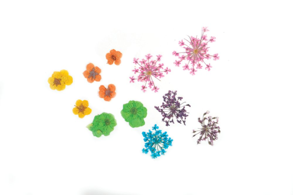 """<p>Exotic Botanicals provides a variety of colors of dried flowers from around the world. Use dried flowers in nail art designs for a delicate and natural look. The flowers can be encapsulated in gel or acrylic or applied directly on top of the top-coated nail with another layer of top coat to affix them. <a href=""""http://www.premiernailsource.com"""">www.premiernailsource.com</a></p>"""