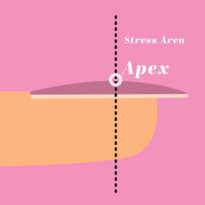 What Is a Nail Apex?