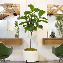 5 Salon Interior Design Trends to Energize Your Space