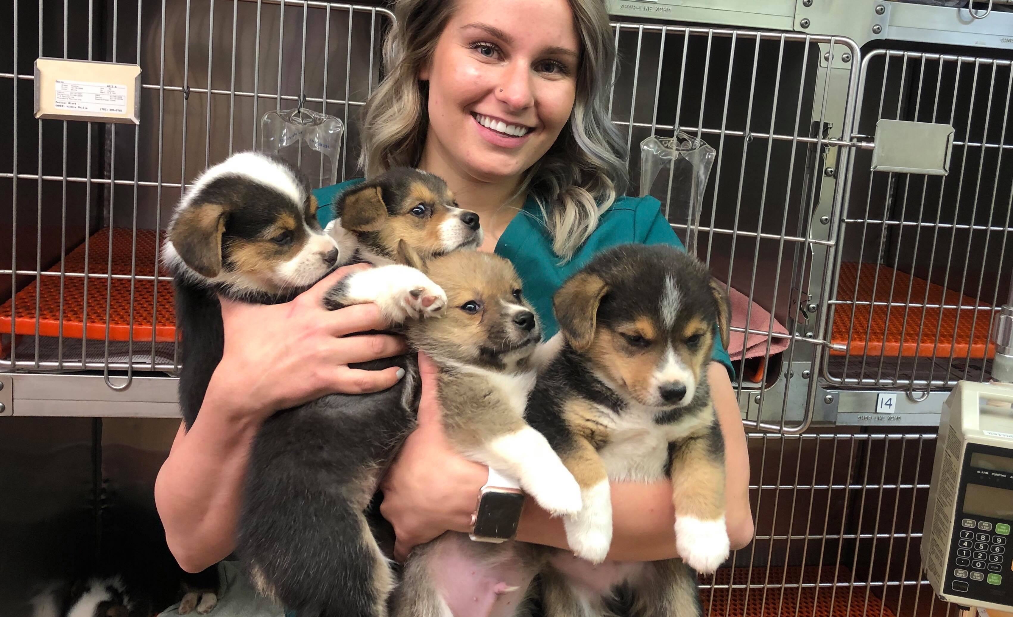 My Other Life: Kaili Windecker, Veterinary Technician